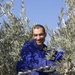 George schneidet den Olivenbaum zurück